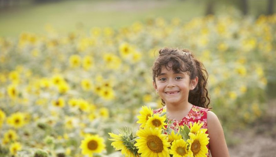 Sunflowers make a fun gardening project for children.