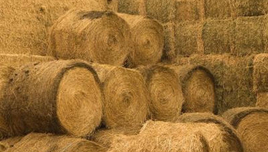 Hay provides important nutrients for grazing animals.