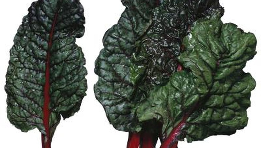 Red varities of swiss chard are named for their distinctive stem color.