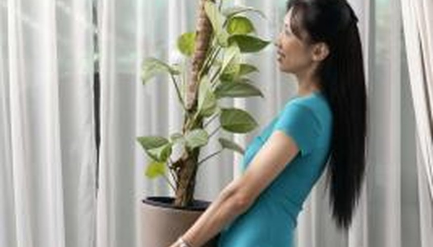 Isolate new houseplants from other plants to determine if they suffer from fungus gnats.