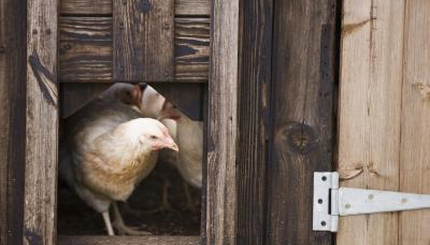 Keep your chicken's home free from unwelcome guests with natural repellents.