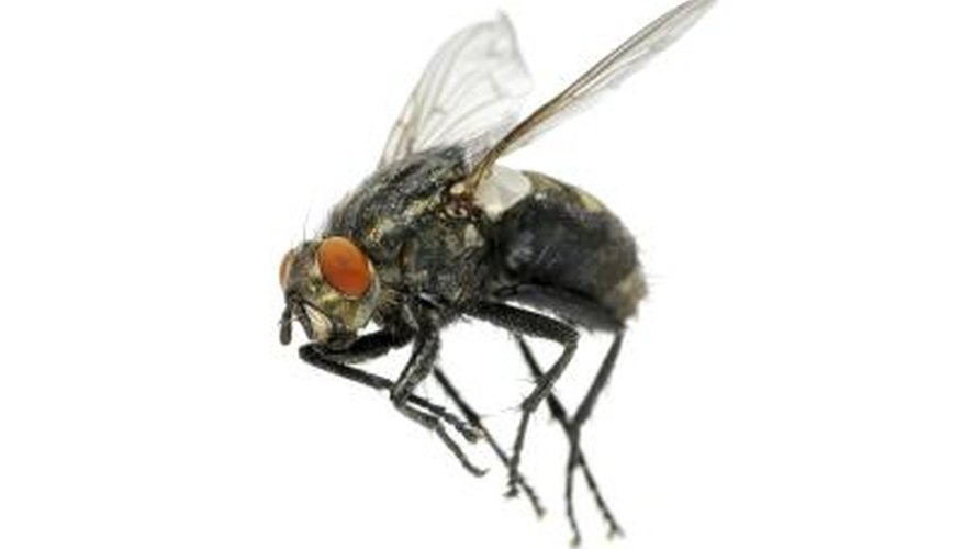 Close up of a fly.
