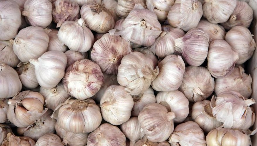 A pound of seed garlic can produce up to 7 pounds at harvest.