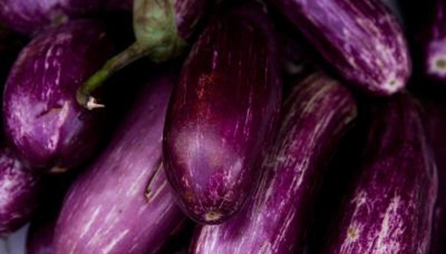 Eggplants generally produce about eight fruit per year.