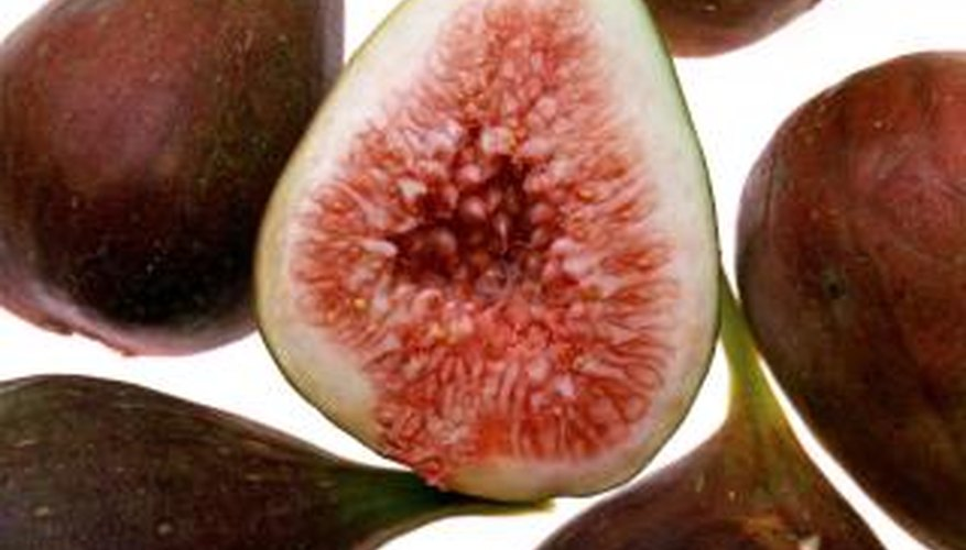 Without the right balance of nutrients, fig trees produce less fruit.
