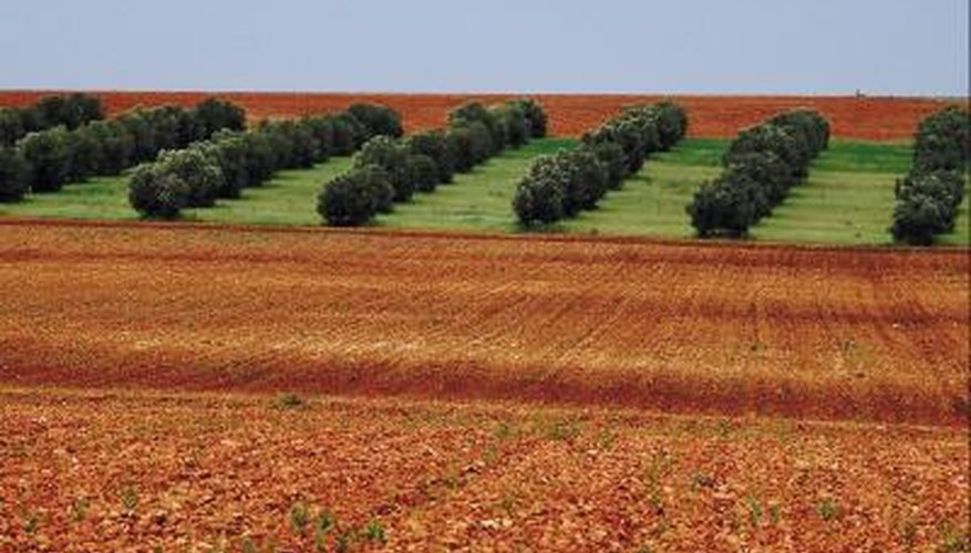 Planting zones in the Mideast produce valuable lumber, fruits and medicinal plants.