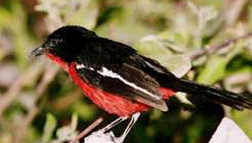 Estrategias toman forma para manejar aves en huertos - Noticias de Cultivadores de Frutas
