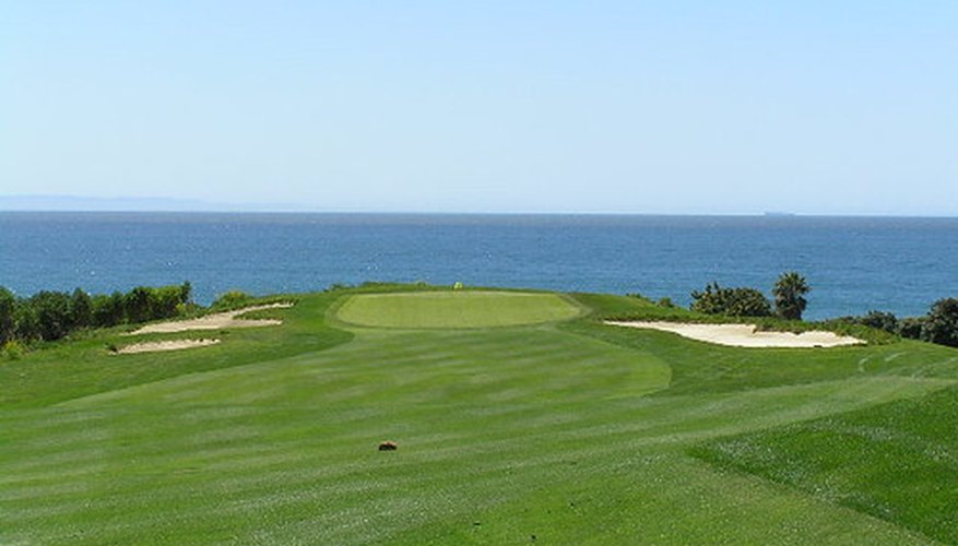 Bermuda grass is popular among golf courses.