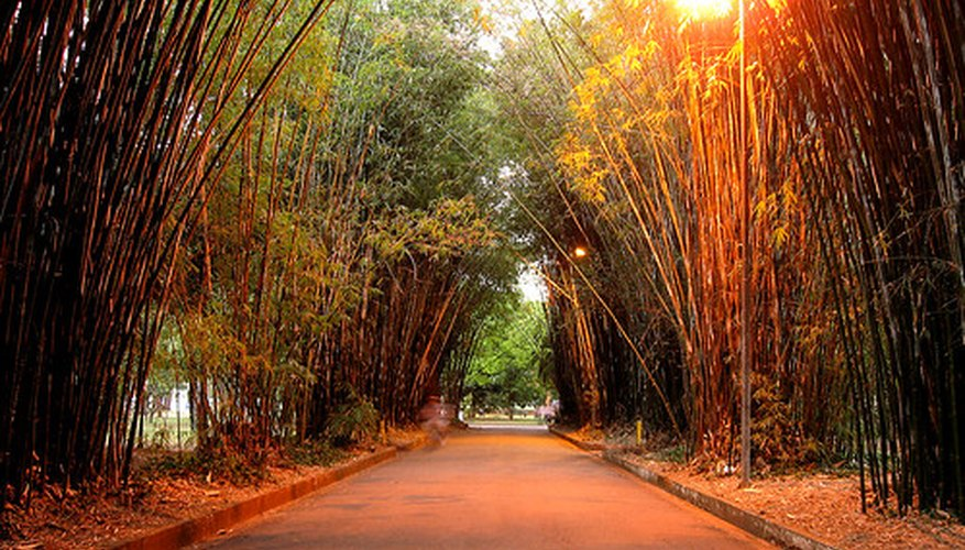 Bamboo is the most commonly thought of Asian plant.