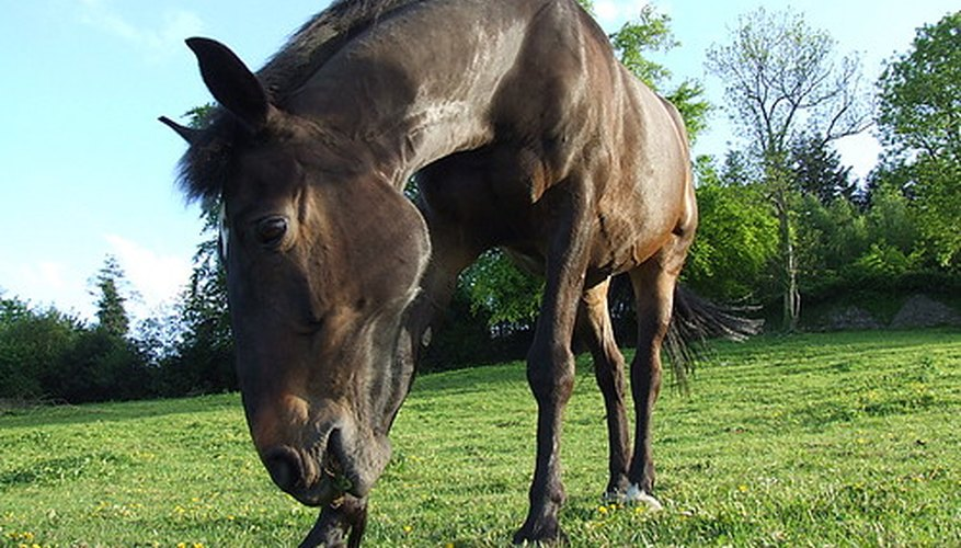 Toxins in fescue may be a danger to horses.