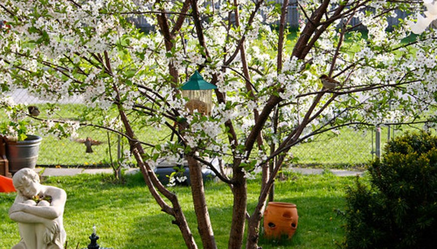 Fruit trees lend an elegant form and delicious bounty to the home garden.