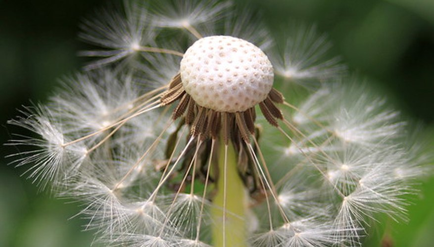 Herbicides kill more than dandelions.