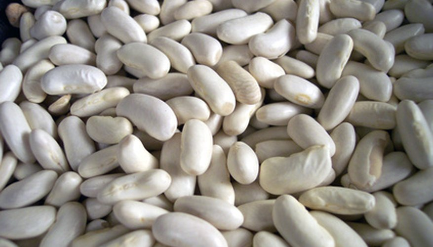 Dried Lima beans are rich in protein.