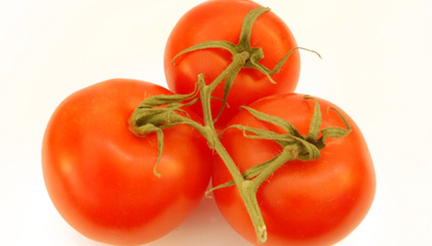 Tomatoes should be covered or harvested if frost is forecasted.