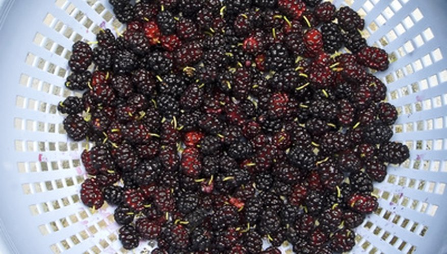 Rinse blackberries before use.