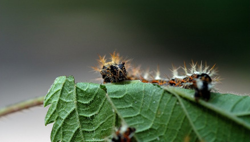 Weeds such as nettle are good caterpillar hosts.