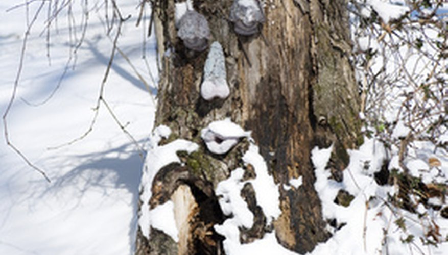 Decorating a stump is one way to help blend an eyesore back into the lanscape.