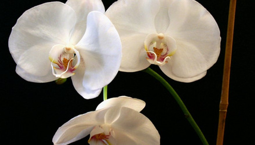 Arrange orchids for an elegant flower arrangement.