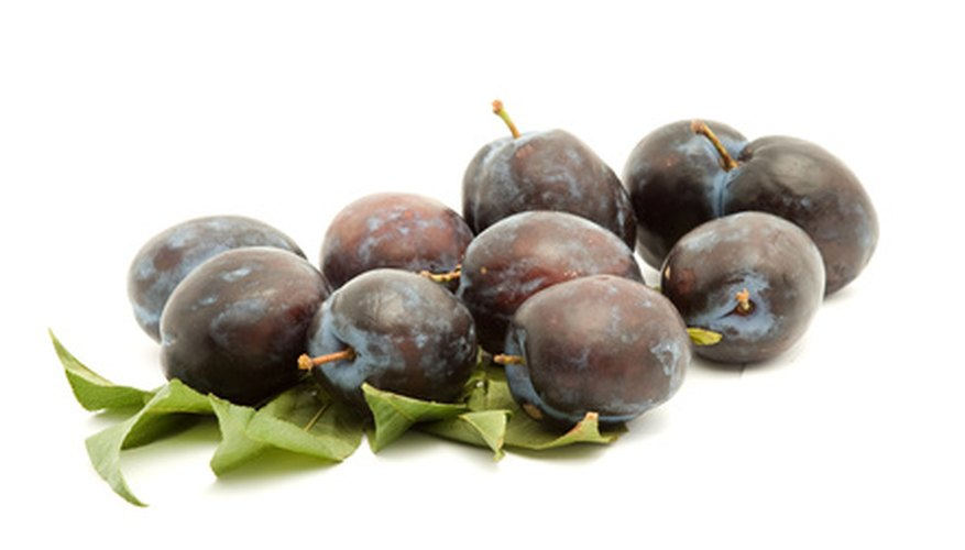Sand cherry bushes produce small stone fruits called beach plums.