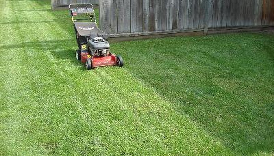 Mow your lawn properly to help grow a healthy lawn.