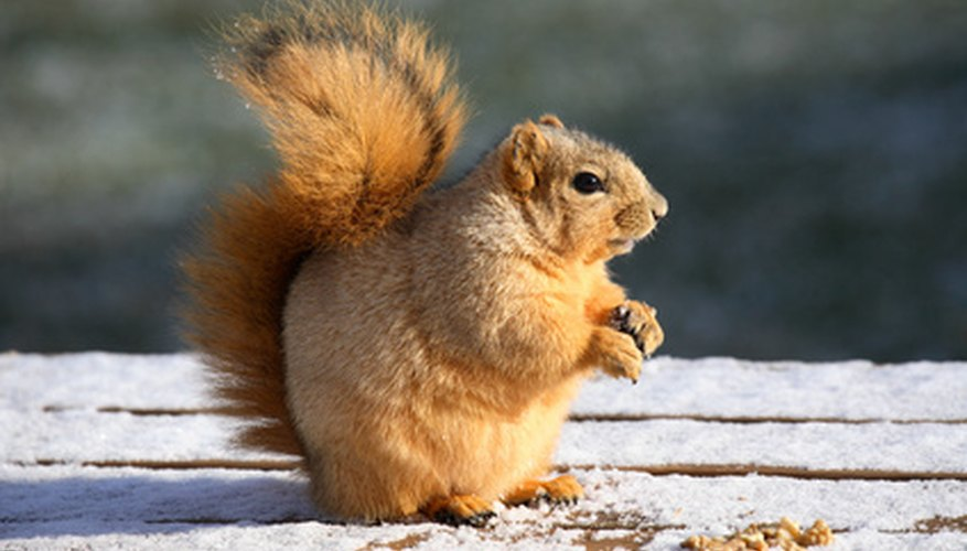 Squirrels thrive happily under black walnut trees but plants may not.