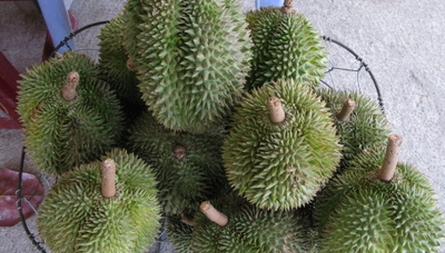 Durian fruits have spiked outer husks.