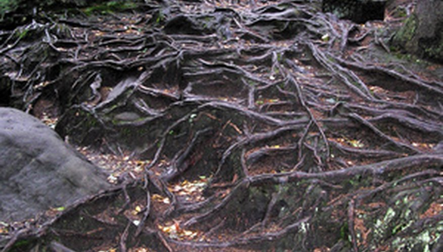 Root barriers prevent roots from getting out of control.