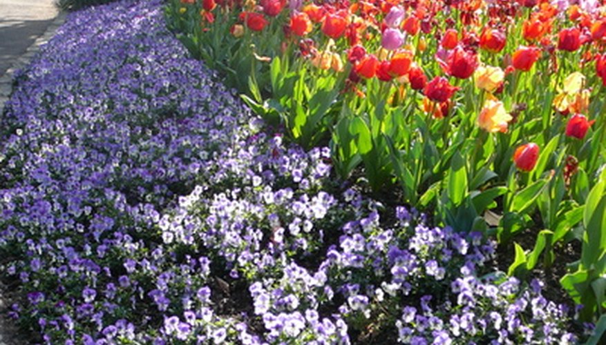 Use flowering annuals and change out with new every season.