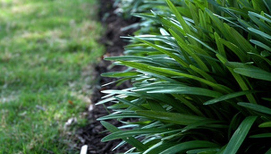 Low-maintenance ornamental grass is a great choice for a border.