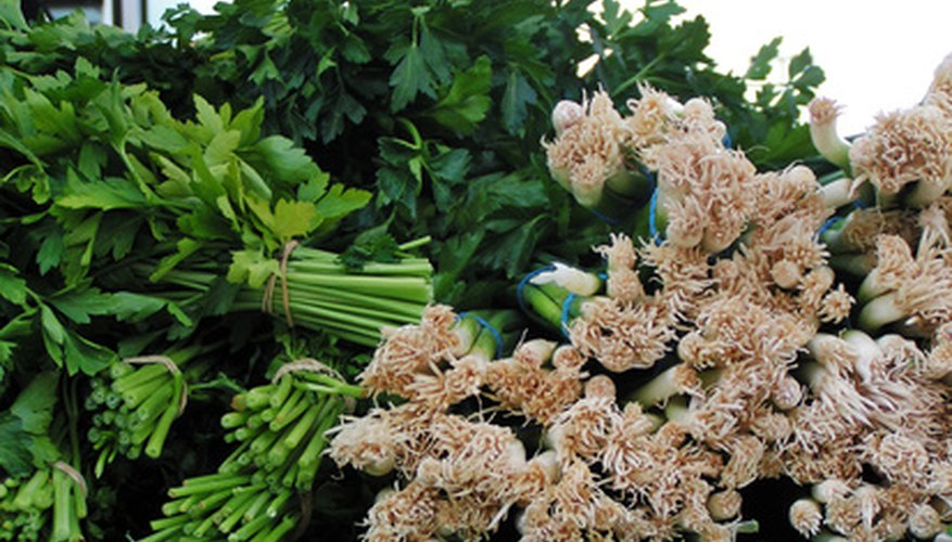 Cilantro can be added to hundreds of dishes in a wide range of cultural cuisines.