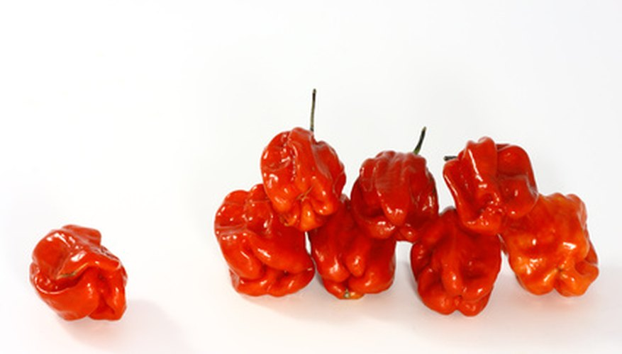 Red habanero peppers