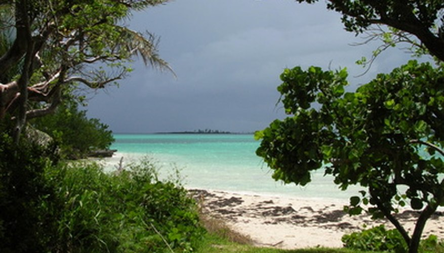 Ecosystems in the Bahamas range from sandy areas to forests.