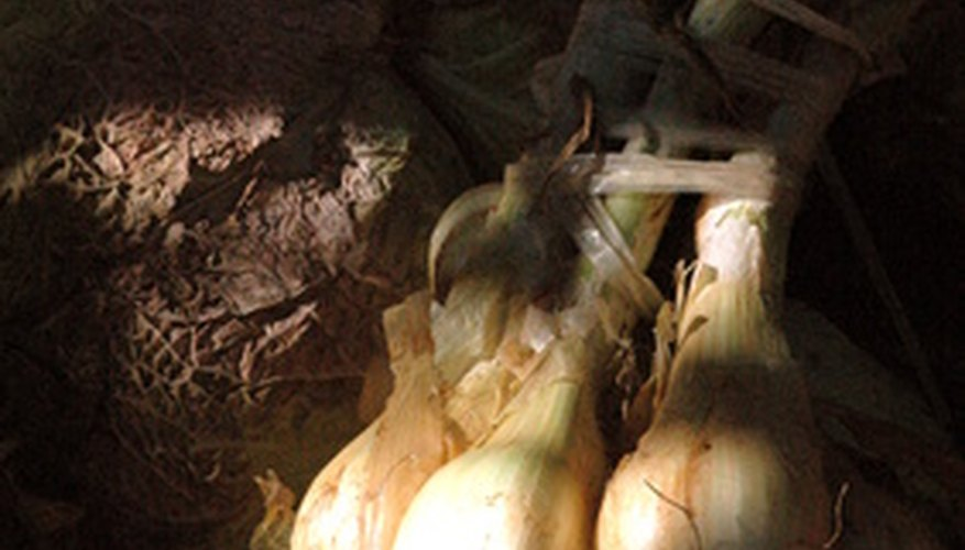 Common fruits and vegetables found underground