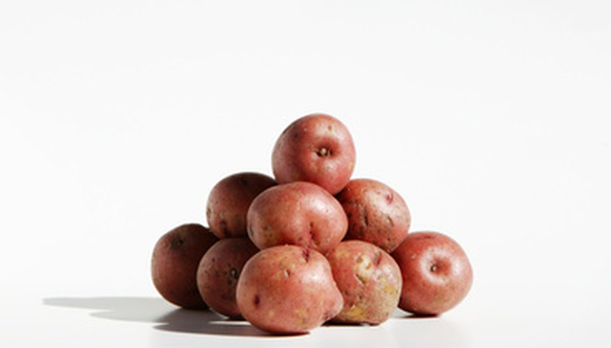 Red potatoes are grown the same way as white potatoes.