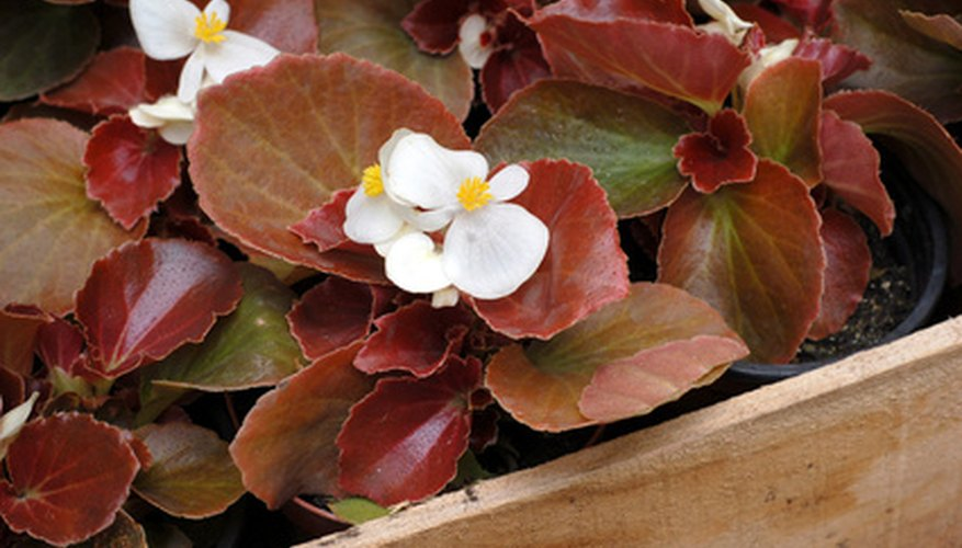 Purchase healthy, undamaged flower seedlings.