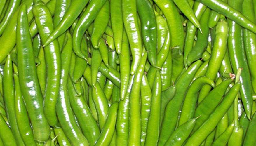Green chile is a warm-season crop.