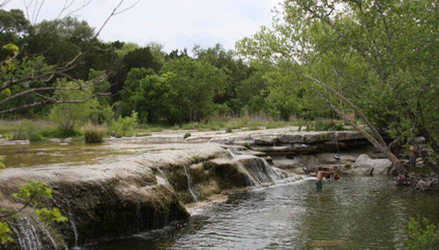 Black walnuts flourish along Texas' stream banks.
