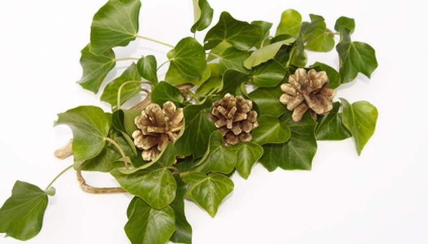 Use ivy in wedding centerpieces as an attractive and inexpensive plant.