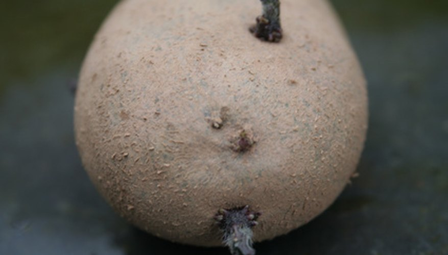 Turn sprouted potatoes into a garden full of plants.