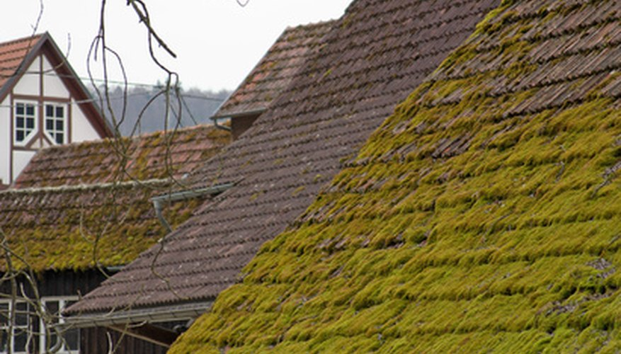 Moss grows on roofs that are exposed to very little sunlight