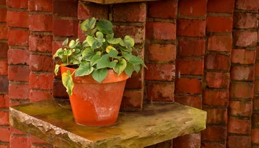 The proper pot size is vital for healthy houseplants.