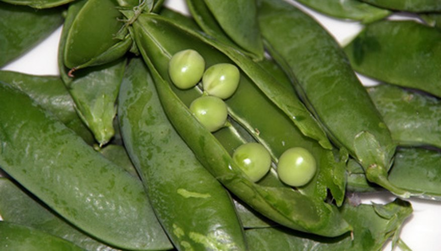 English peas grow best in the cooler seasons of fall and winter.
