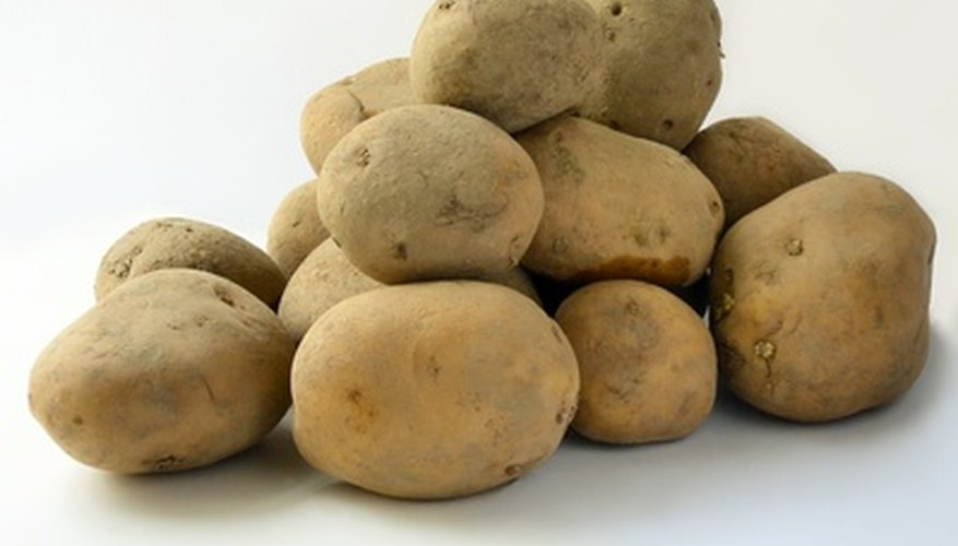 Potatoes, technically tubers growing on underground stolons, enable asexual reproduction.