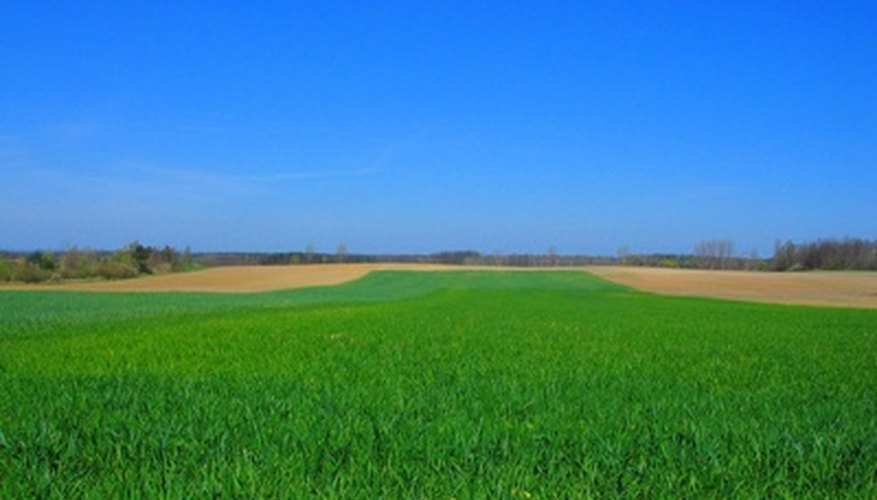Wheat grass is the young grass of the wheat crop.