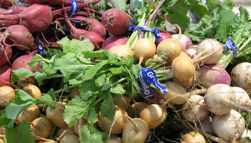 Turnips are among the root vegetables that thrive in Reno.