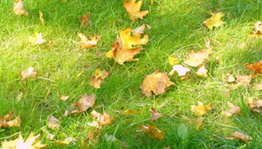 Large dips in your lawn can cause drainage problems that affect your grass.