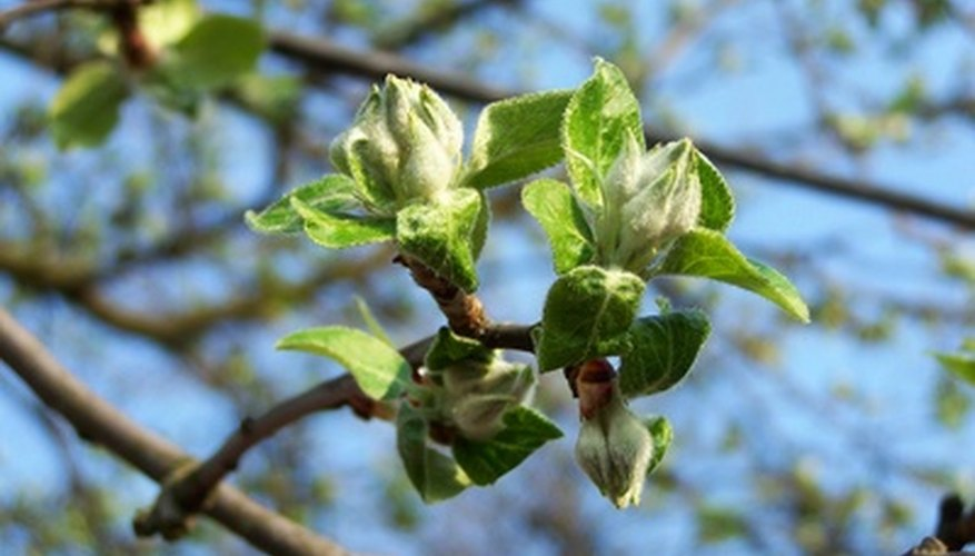 Apples and peach trees can benefit from fertilizers in the late winter or early spring.