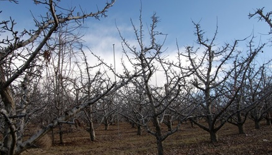 Copper fungicides are best applied when fruit trees are dormant.