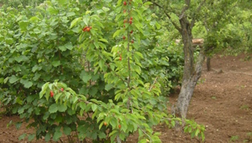 There are several different types of fruit-bearing trees.