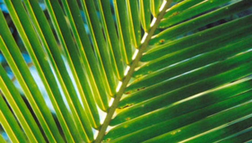 Palm leaves are used to create religious icons during Lent.